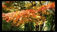 Arboretum Doorn