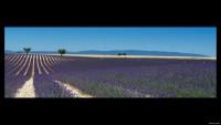 De-vlakte-van-Lavansole-Provence-Frankrijk